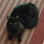 Jack (Black Cat)