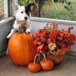 Gideon Pumpkins